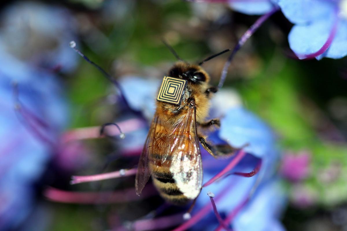 bee-sensor-press-photo-csiro.png