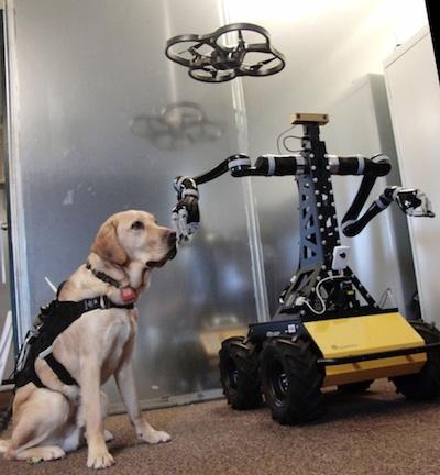 dogbot2-cropped.jpg