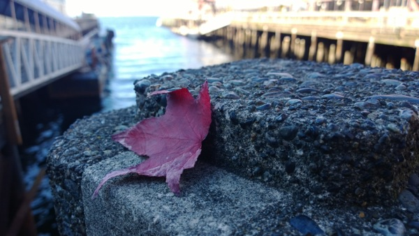 Leaf near the water shot with Nokia Lumia 1020