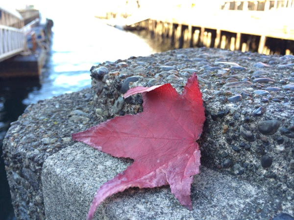 Leaf near the water shot with Apple iPhone 5s