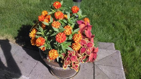 Moto X flower pot