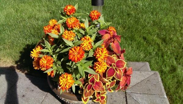HTC One flower pot