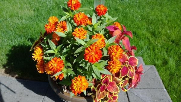 Lumia 1020 flower pot
