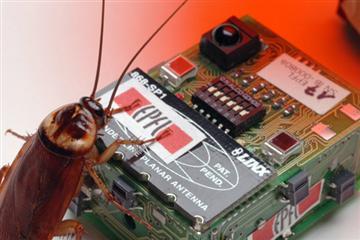 40150968-1-roach.jpg