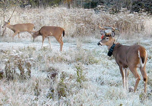 Photo: A deer's-eye view