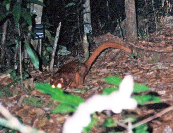 discovery in Borneo