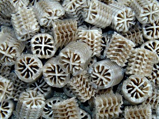 Aqwise capsules
