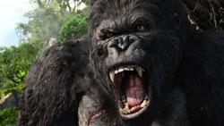 Kong roars