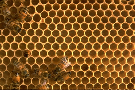 Oracle collaborates with Beehive