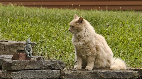 Cat Stares Down Gnome