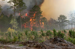 Bugaboo forest fire in Lake City, Florida from Wikipedia