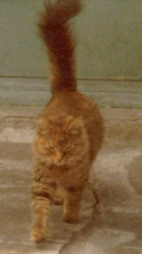 Kaleidecat from 1980