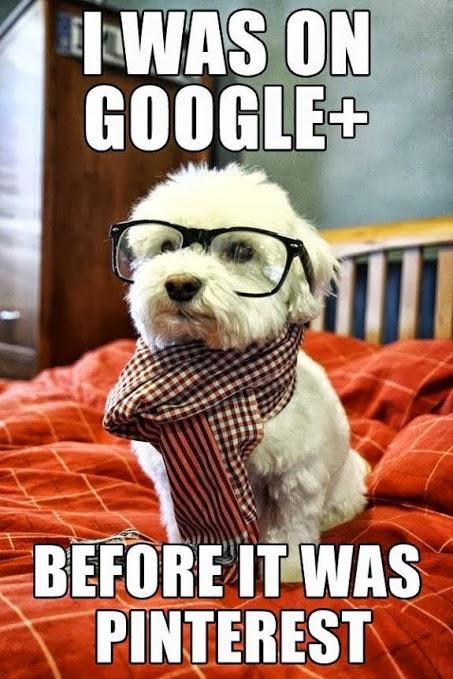 GooglePlusPup