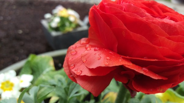 HTC One M9: Raindrops on a flower