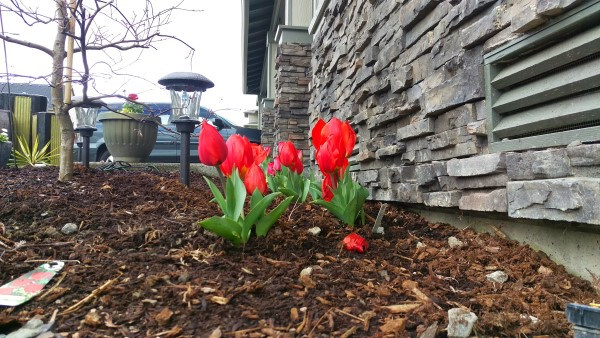 HTC One M9: Tulips are out
