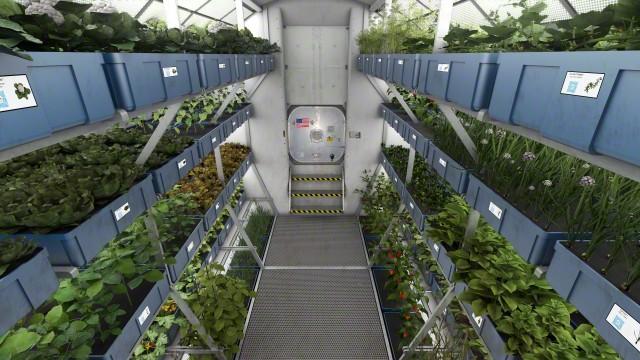 NASA's garden