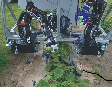 Catch, the robotic garden