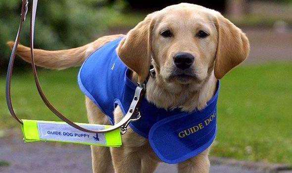 guide-puppy.jpg