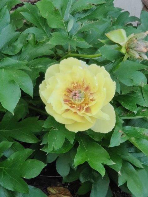 note-8-flower.jpg