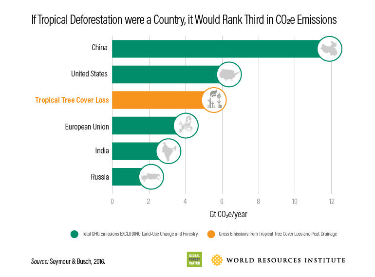 gfw-deforestation-carbon-emission.jpg