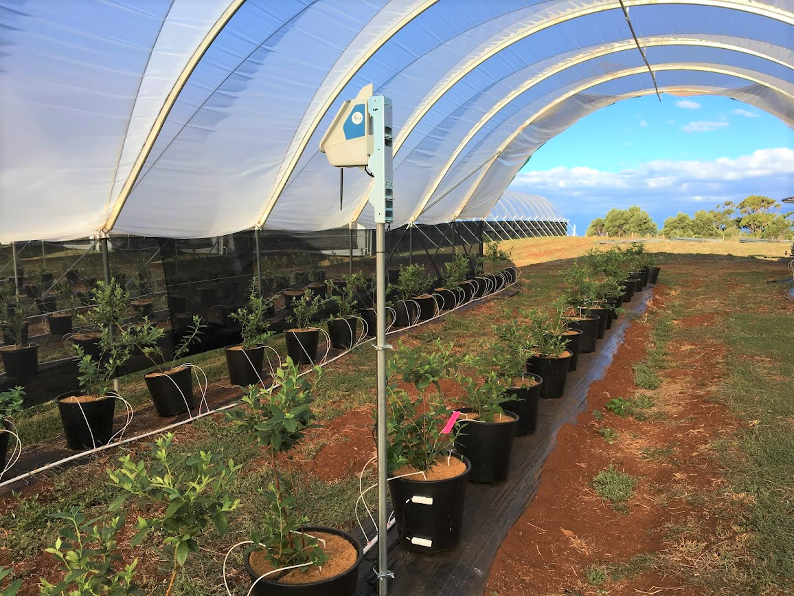 ty-node-in-costa-polytunnel-1.png