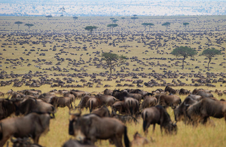 The great annual migration