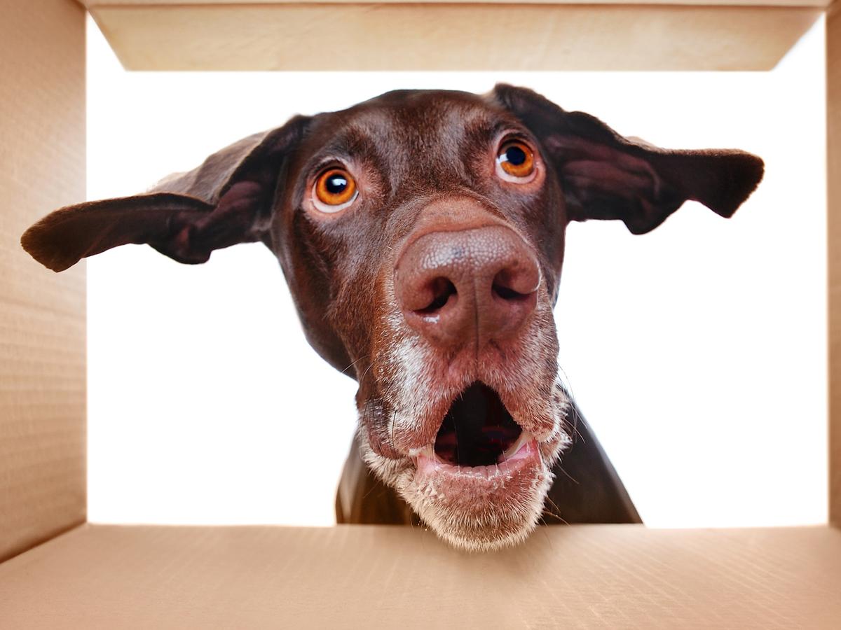dog-surprised.png