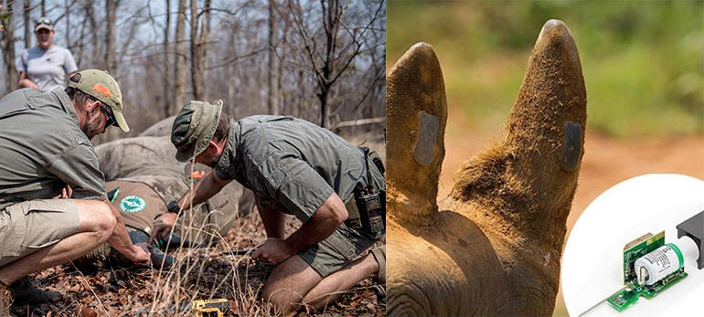 smart-park-rhino-tagging.jpg