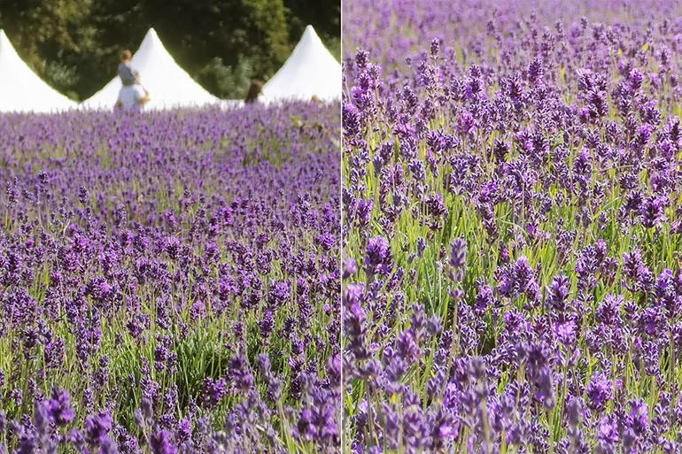 huawei-p40-pro-lavender.jpg