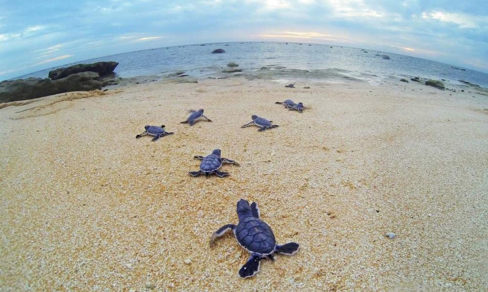 turtle-friendly-lighting-lorawan-for-good.png