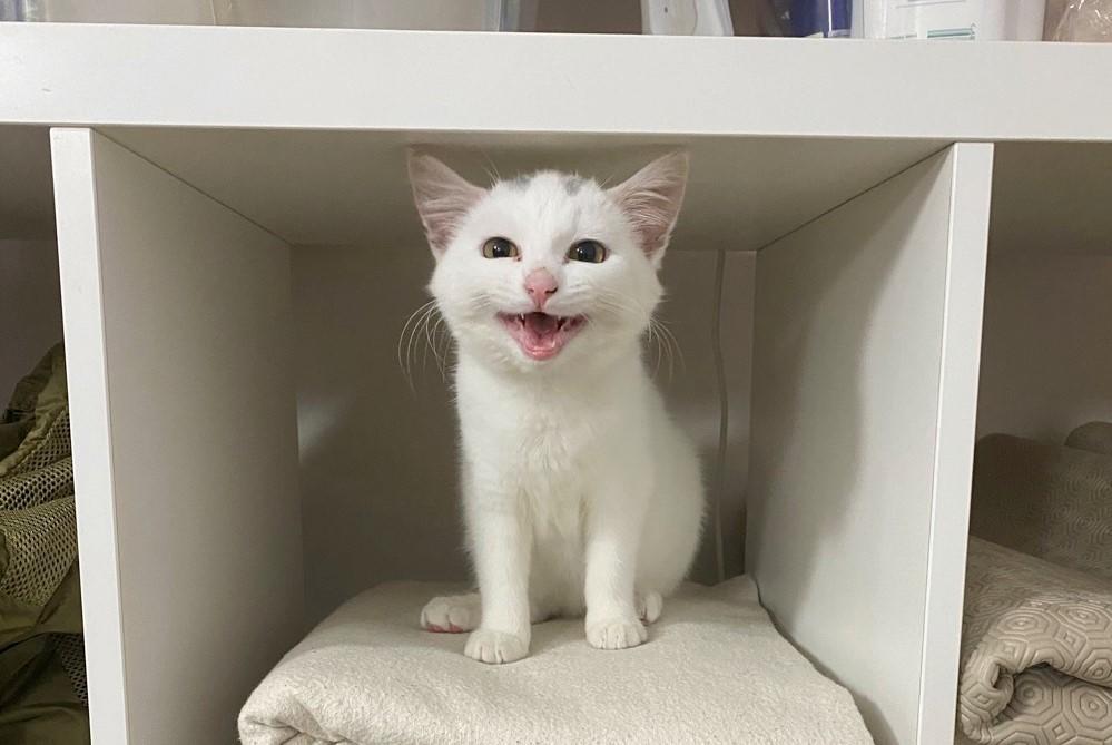 kitten-adi.jpg