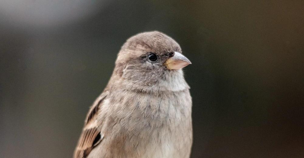 silver-sparrow.jpg