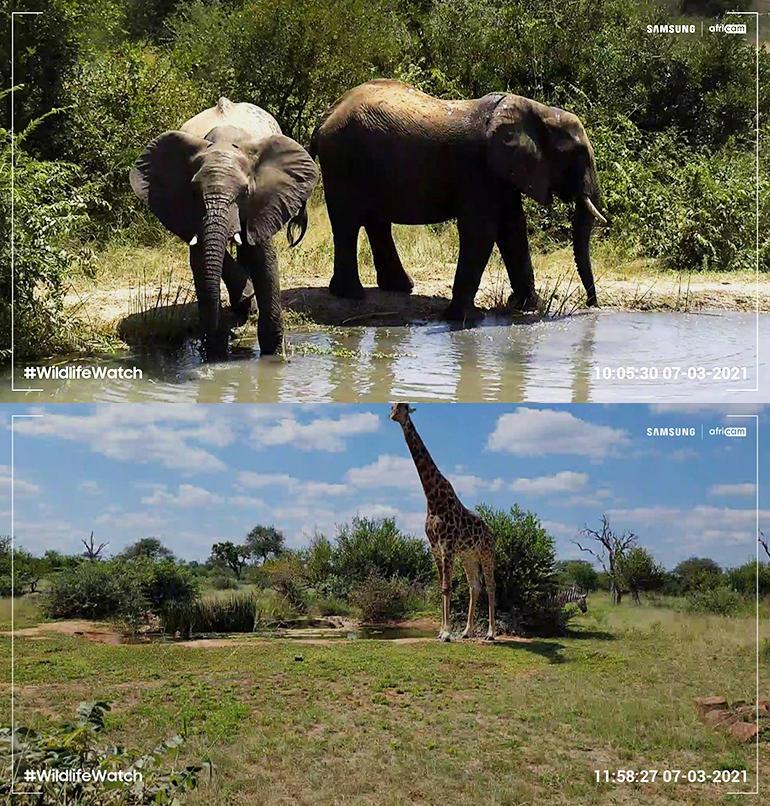 samsung-wildlife-watch-photos.jpg