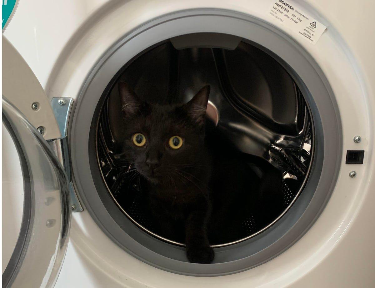 cat-in-washing-machine-boston.jpg