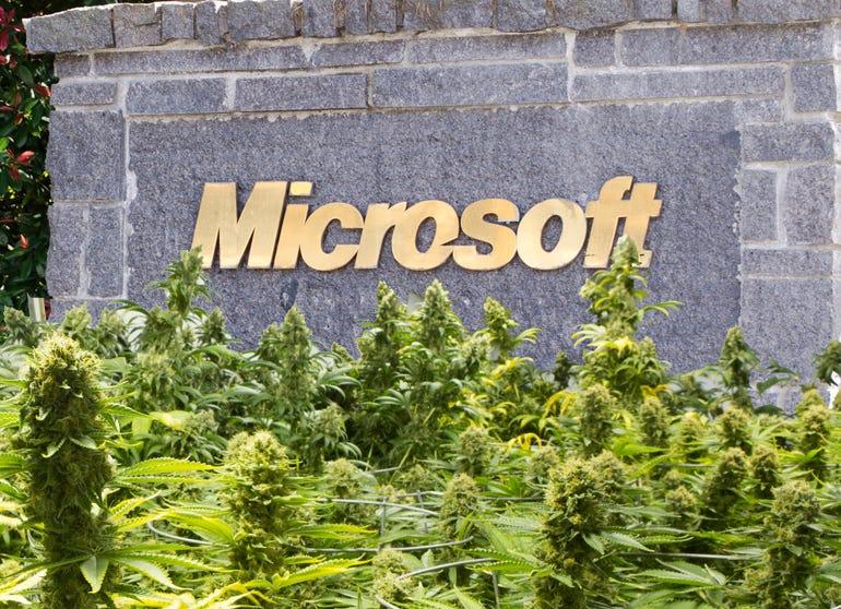 microsoft-marijuana.jpg