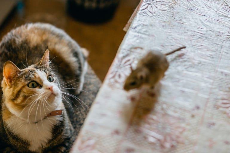 cat-and-mouse-2.jpg