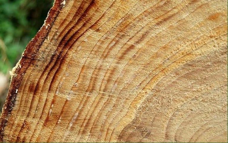 tree-rings-albert-bridge-620x387