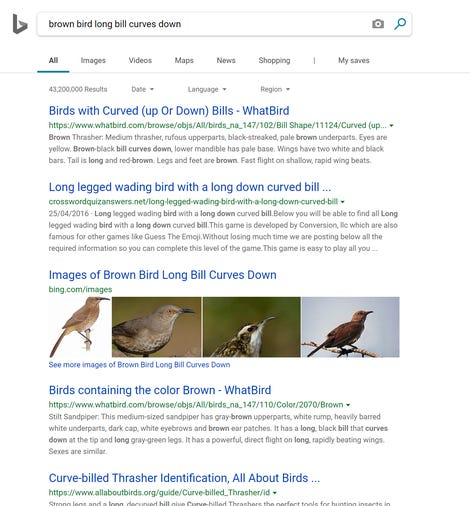 "Bing search interface with search results for ""brown bird long beak curves down"""