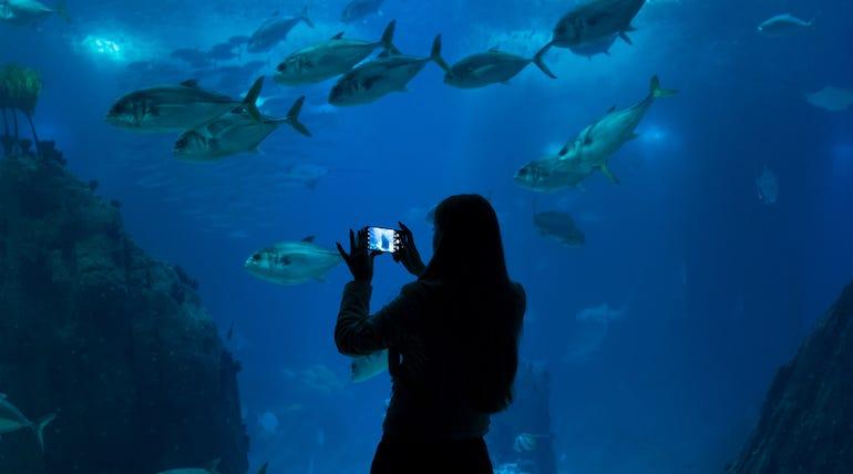 06-2-p20-pro-fcb-aquarium.jpg