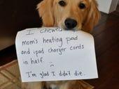 Pets: Scourge of BYOD