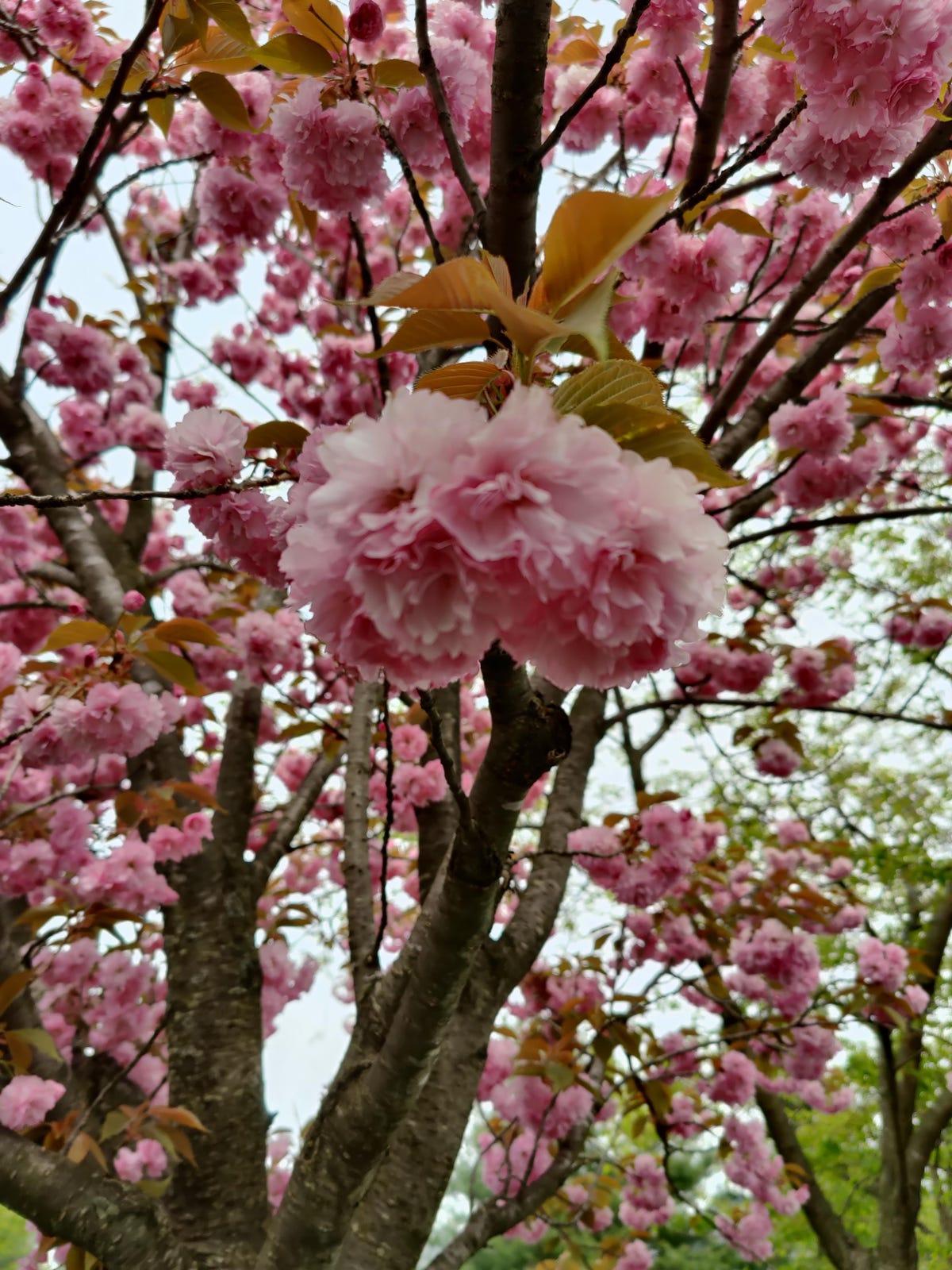 oneplus-8-pro-pink-flower.jpg