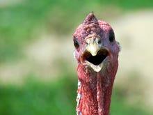 The biggest tech turkeys of 2015