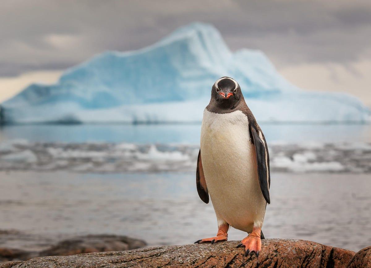 gettyimages-penguin-antarctica.jpg
