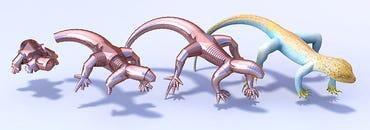 lizard-teaser-half.png