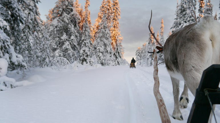 In the sledge on a winter path