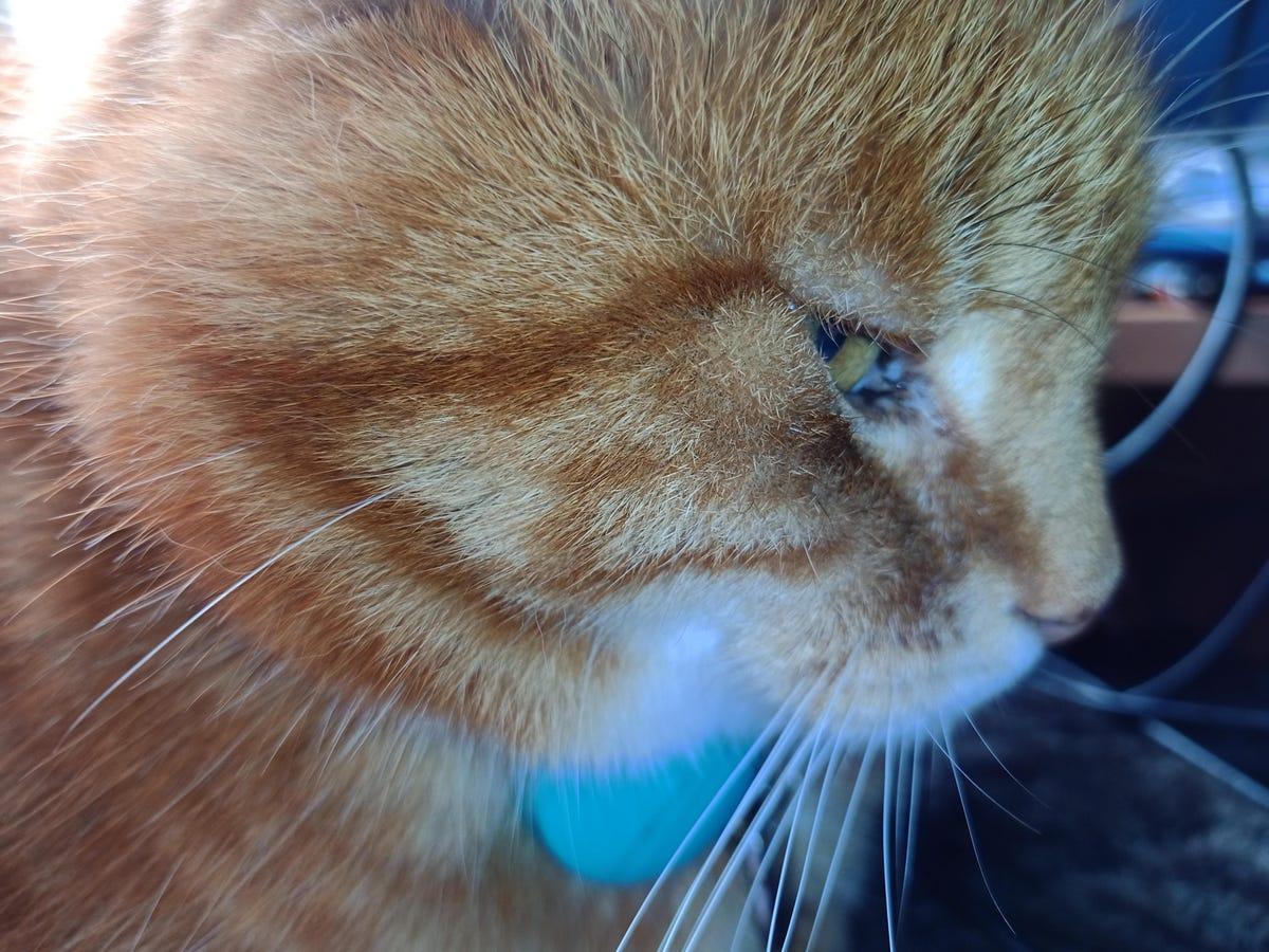 eileen-brown-cat-barney-amastra.jpg