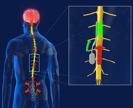 The spinal chip in action