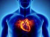 heart-donor-organ-istock.jpg