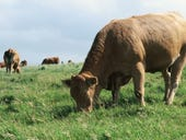 Moo-vement tracker: Nevada startup brings IoT to the cattle industry