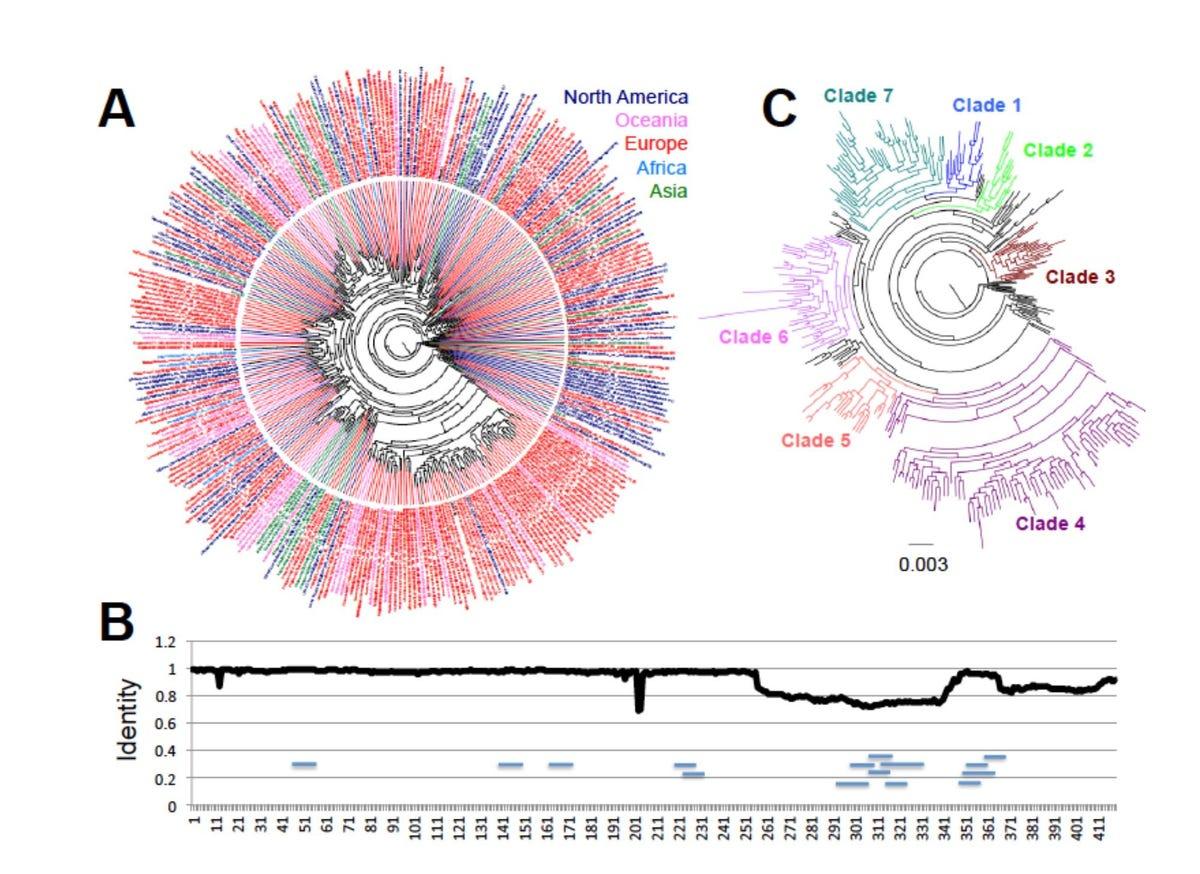 dumonteil-herrera-2020-phylogeny-of-covid-19.jpg